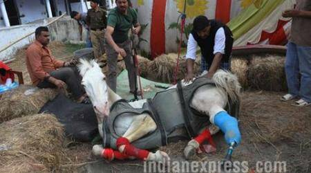 Why a broken leg could've been a death knell for Shaktiman