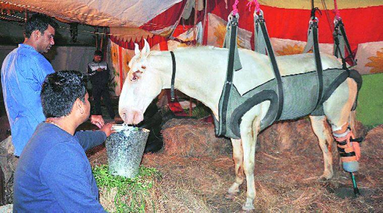 Shaktiman on Monday. Express