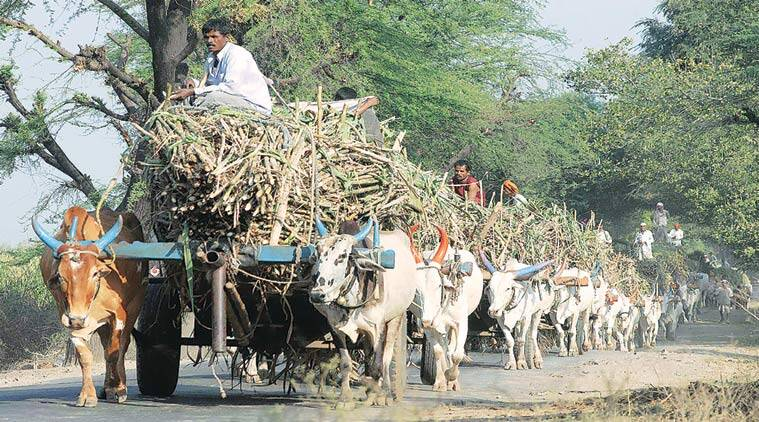 drought, maharashtra drought, maharashtra mills, export quota, mill export quota, mumbai news
