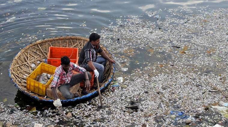 Municipal workers clear dead fish from the Ulsoor Lake in Bengaluru, India, March 7, 2016. The reason for the death of thousands of fish remains unclear. REUTERS/Abhishek Chinnappa TPX IMAGES OF THE DAY
