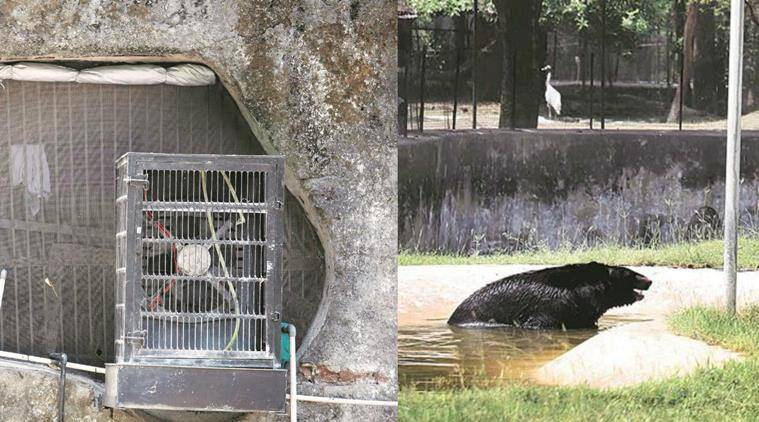 (From left) Although officials said most of the arrangements were completed, facilities such as this cooler were not functional. A sprinkler has been set up for the Himalayan black bear. Photos: Jaipal Singh