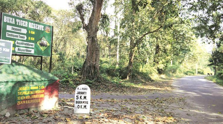 Buxa Tiger Reserve forest at Alipurduar in North Bengal. Express photo by Subham Dutta. 05.01.16