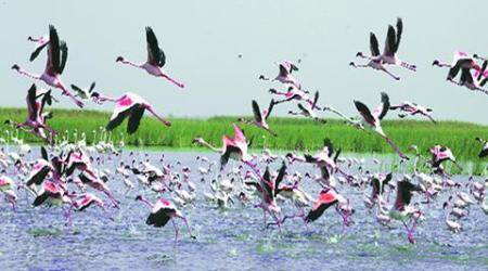 Rampant poaching at Nal Sarovar, no step taken to protect wetlands
