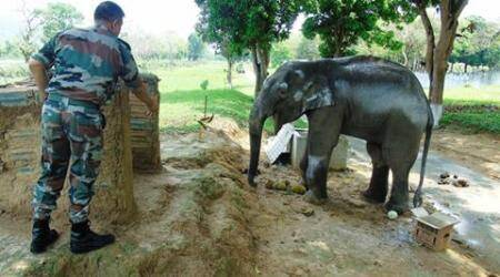 Army, baby elephant, ditch, Guwahati cantonment, Guwahati, india news