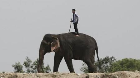 Kerala: Elephant attacks man who tried to take a selfie with it