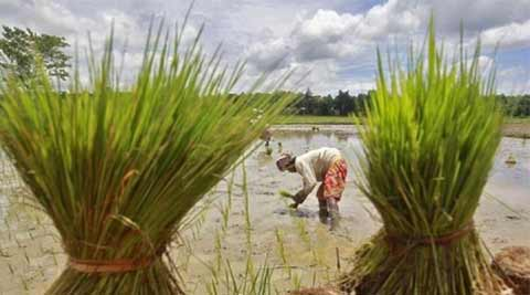 What's in National Agriculture Market? | India News,The ...