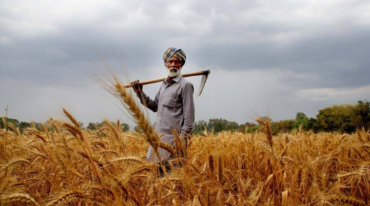 farming sector, agriculture, agriculture sector, union budget 2016, 2106 union budget, agricultural credit, interest subvention scheme, short-term agri credit, agriculture budget allocation, rbi, Nabard, agricultural schemes, agricultural news, india news, latest news