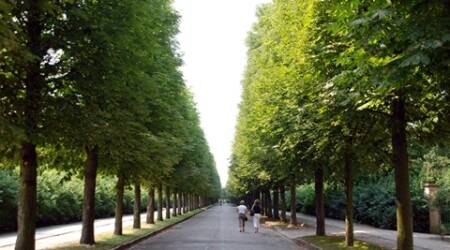 Road pathway in between lined trees