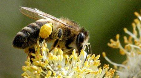 Now, 'sting' operation promises to bare the honeyworld