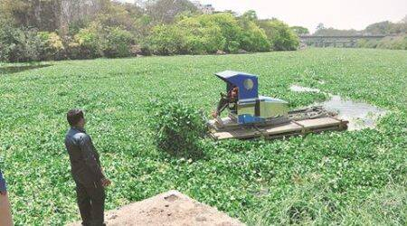 Pune: PCMC launches all-out bid to clear city rivers ofhyacinth