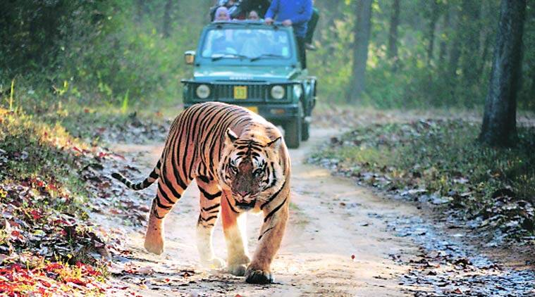 Kanha National Park, kanha park, Kanha–Pench forest corridor, Kanha–Pench forest, india forest preservation, kanha national park forest preservation, india forest conservation, kanha green initiative, kanha green conservation, india news