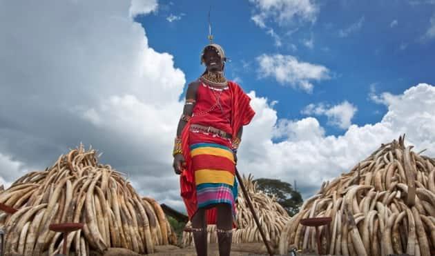 kenya, kenya ivory, kenya ivory photos, ivory photos, kenya ivory burning, kenya burning ivory, elephant poaching, rhino poaching, africa, africa ivory, africa ivory burning, africa news, world news