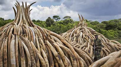 Kenya's ivory pyre to spread awareness about elephant poaching