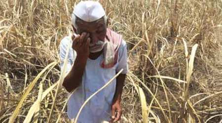 Maharashtra plans to bring 2.18 lakh hectaresunder irrigation in 14 suicide-pronedists