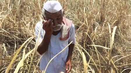 Maharashtra: In three months, 639 farmers committed suicide owing to crop failure and debt