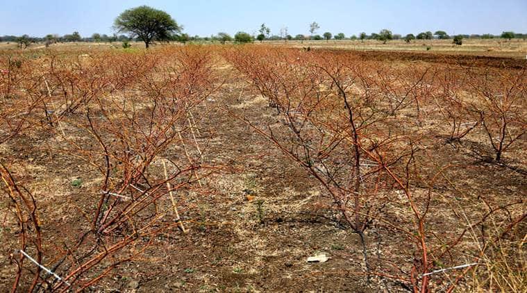 drought in marathwada