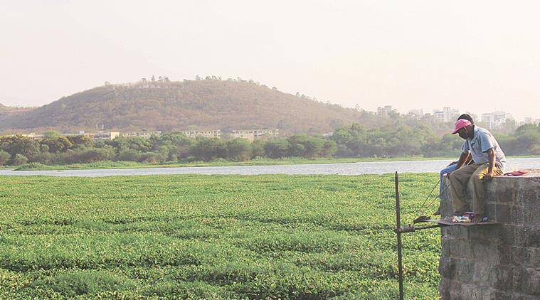 Pashan Lake covered with Water hyacinthat Express Photo By Amit Ruke,16.04.16,Pune.