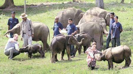 Royal couple in Assam: Elephant calves steal the show at Panbari