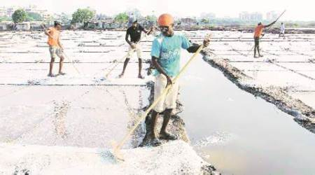 salt workers, gujarat salt workers, gujarat government, gujarat govt, state law commission, indian express ahmedabad