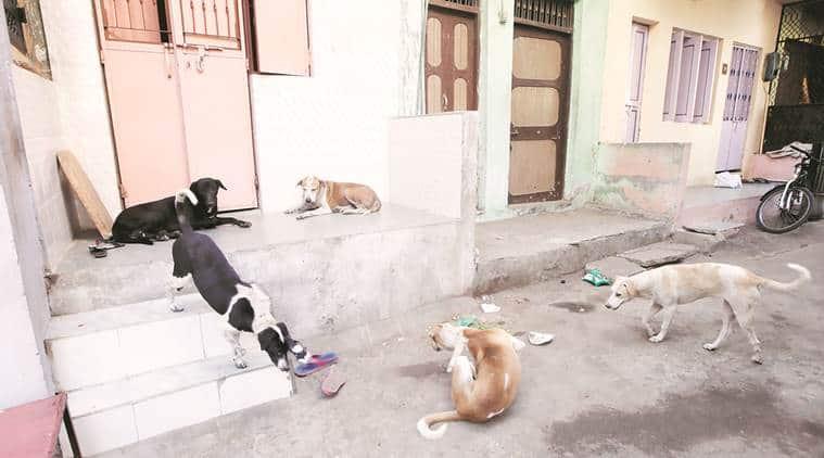 kerala government, violent dogs, violent stray dogs, kerala government decision to cull stray doga, Maneka Gandhi , Prashant bhusan, street dogs, killing of stray dogs, kerala news, india news