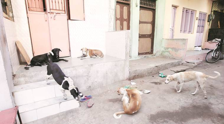 "According to some civic body officials, humans too share the blame for canine attacks — ""They (dogs) usually attack only when teased or harmed."" Javed Raja"