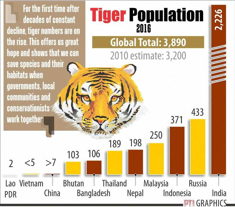 A PTI graphic showing the tiger population across countries in the world