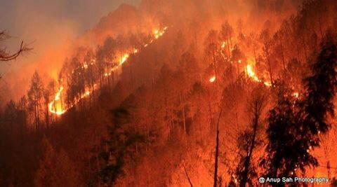 uttarakhand, uttarakhand forest fire, uttarakhand forest fire relief, uttarakhand fire relief work, uttarakhand forest fire ndrf teams, uttarakhand forest fire pmo, india news, uttarakhand news, environment news, latest news