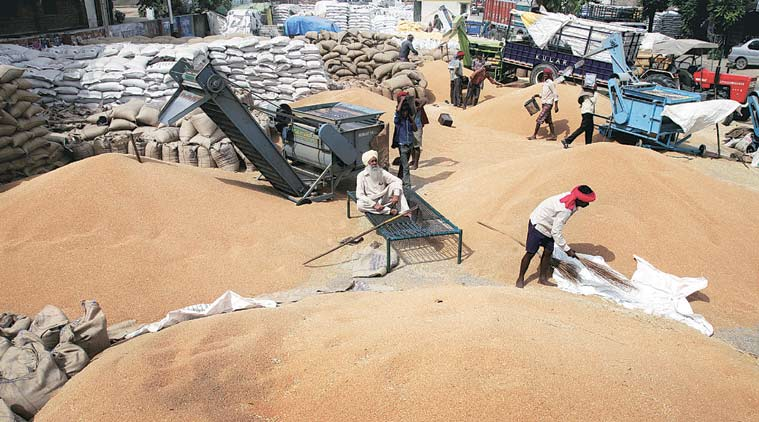 wheat procurement crisis, Punjab farmers, Punajb wheat procurement crisis