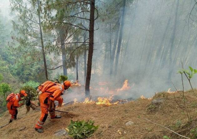 fire, forest fire, uttarakhand, uttarakhand fire, uttarakhand forest fire, himachal fire, himachal forest fire, forest fire news, forest fire in uttarakhand, forest fire images