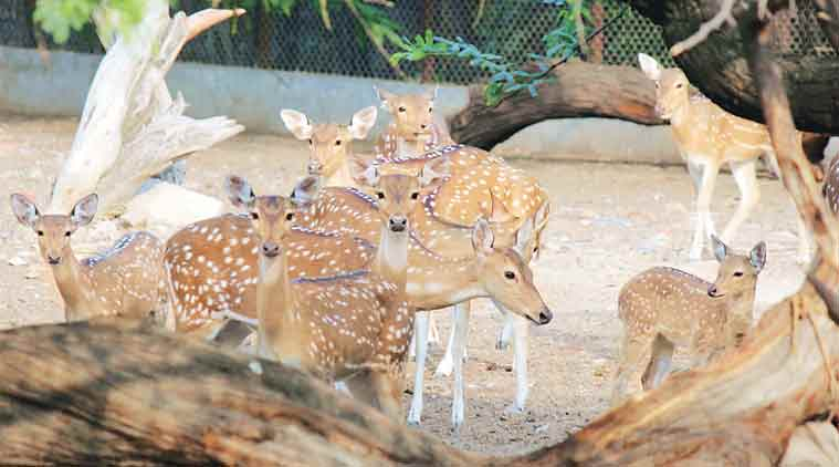 Delhi zoo, Delhi zoo deer death, spotted deer death, National Zoological Park, Central Zoo Authority, delhi news