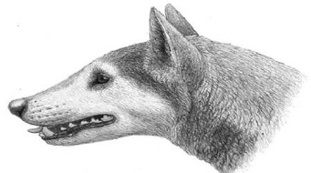New species of 12-million-old dogidentified