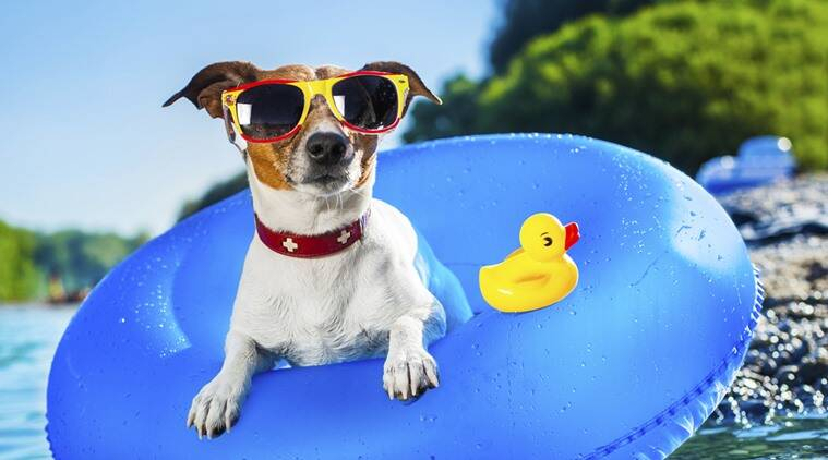 PETA, People for Ethical Treatment of Animals, summer, Indian summer, caring for animals, tips for caring for animals, how to care for animals, how to care for animals in summer, dehydration in animals, working animals,