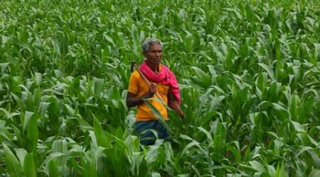 one crop per drop, agro-reforms, agricultural reforms, mumbai farmers, ministry of agriculture and water conservation, agricultural development, agricultural news, mumbai news