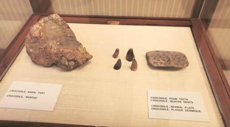 Masoul village, masoul village fossils, masoul village fossil excavation, pmo masoul village excavation, chandigarh govr museum, india news, chandigarh news latest news