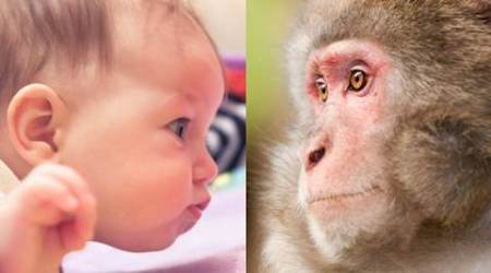 Monkeys and humans share gazing behaviour: Study