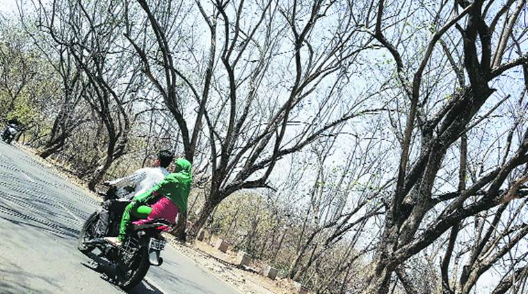 Pune, Pune heat, heat, met department, temperature, pune temperature, pune news