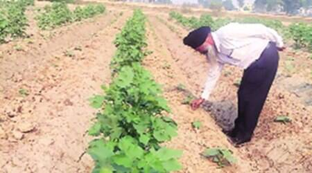 Water crisis in Punjab: To save water, farmers adopt smarter practices, get greateryield