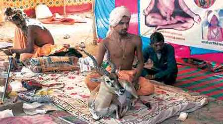 Sant detained with black buck near Ujjain