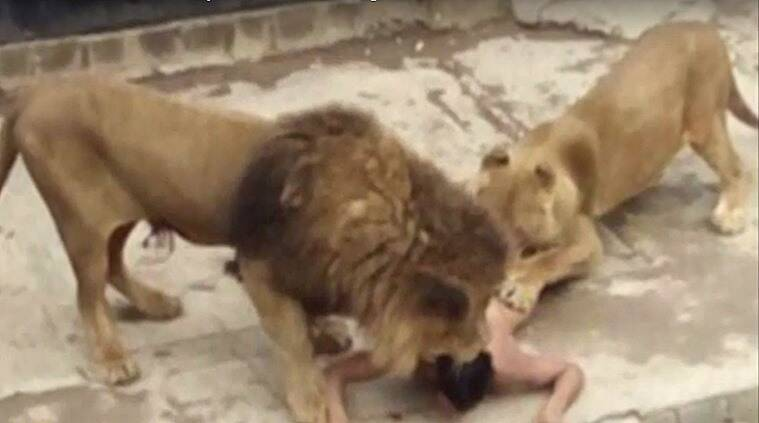 man jumps into lion cage, naked man attempts suicide by jumping into lion cage, Franco Luis Ferrada Roman, Santiago zoo,