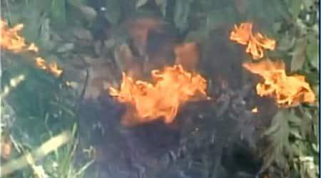 Forest fires wreak havoc in Himachal, CM Virbhadra Singh says 'nothingnew'