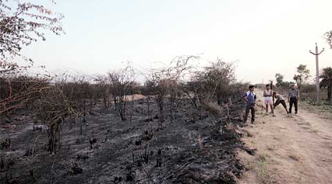 Soor Sarovar Bird Sanctuary fire, Soor Sarovar Bird Sanctuary, Soor Sarovar Sanctuary, Agra Bird Sanctuary, Soor Sarovar fire, Agra Bird Sanctuary fire, India news