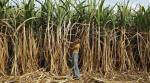 Sugarcane farmer dues Rs 700-800 cr, says PM but data says Rs 5,795 cr