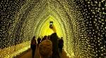 Tunnel of lights, animal lanterns illuminate Sydney festival