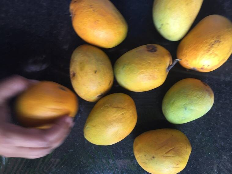 Tagore's great love for mangoes in captured in his poem, Nimantran.