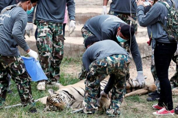 Thailand, Ivory, wildlife, wildlife protection, Thailand ivory, TRAFFIC, endangered species, news, latest news, thailand news, world news, international news