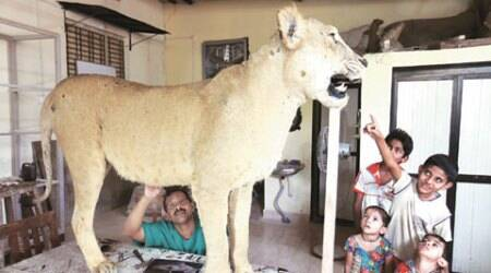 A day in the life of  taxidermist at Bombay Veterinary College