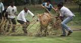 Watch Nilgai Creates Rukus Near Parliament In North Block Delhi