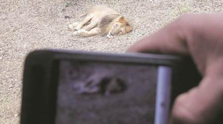 zoo, zoo norms, zoo regulations, dos and dont in zoo, CHHATTBIR Zoo, chandigarh zoo, summer vacation zoo visit, chandigarh news, india news, latest news
