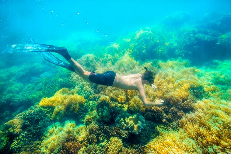 Airbnb Great Barrier Reef snorkeling_759