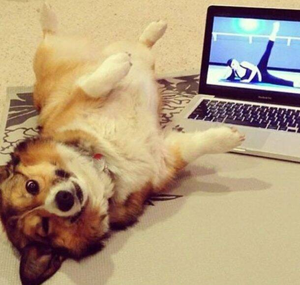 22 'aww'dorable pictures of animals doing yoga poses